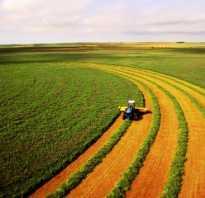 Аренда земель сельскохозяйственного назначения