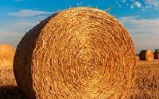 Аренда земли у администрации сельского поселения цена